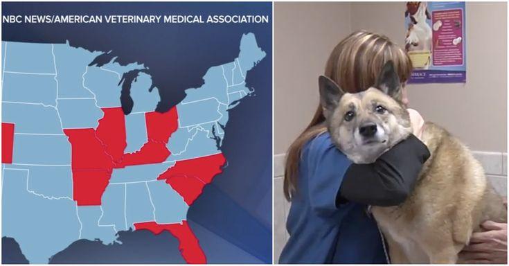 Can A Dog Catch Cat Flu