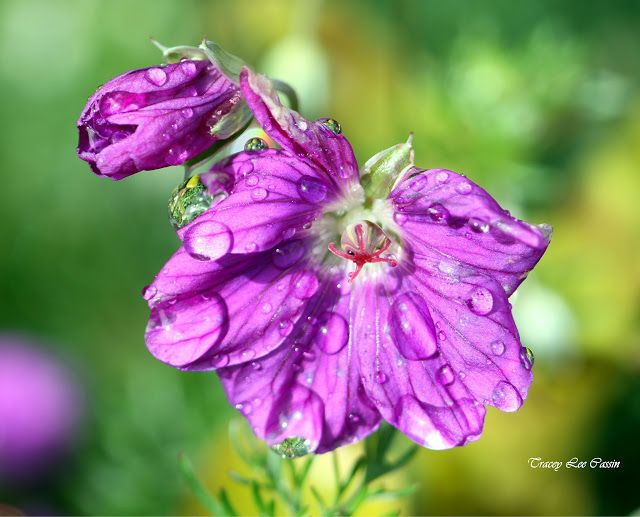 Tracey Lee Cassin Art: raindrops and reflections photograph...