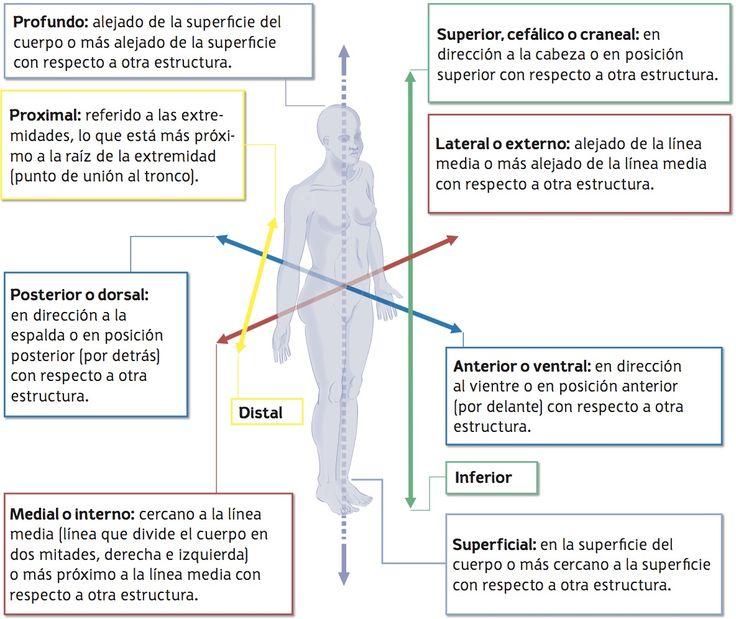 The 161 best Localización de Estructuras Anatómicas images on ...
