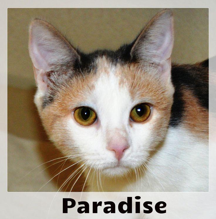 Meow! I'm Paradise and I originally arrived to SCCA with a