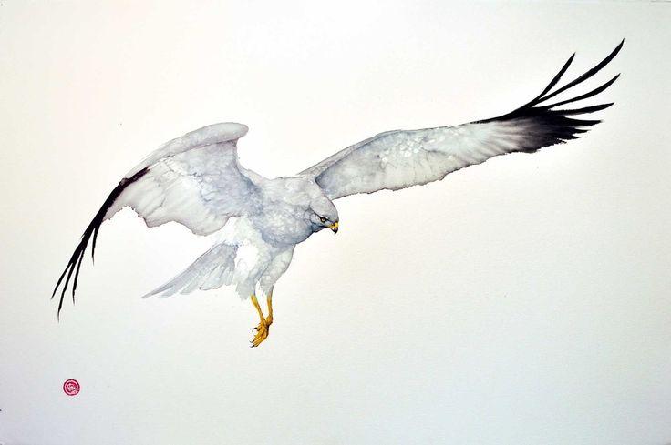 Karl Martens, Northern Harrier (Framed) | Cricket Fine Art