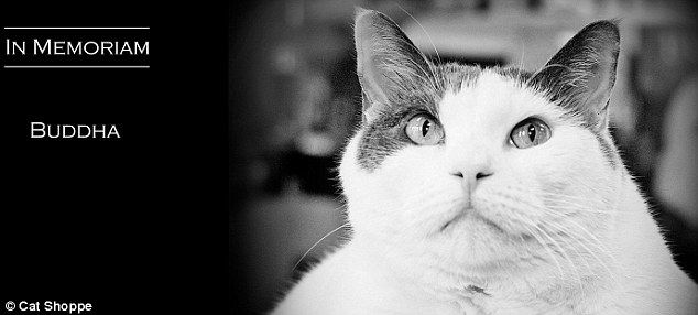 Tribute: The Cat Shoppe posted a statement announcing Buddha's death on Friday