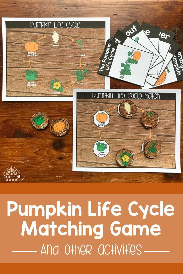 Looking For A Fun Way To Teach The Pumpkin Life Cycle And Pumpkin