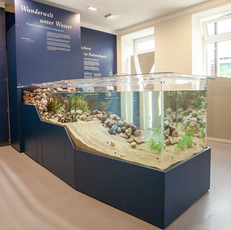 a learning environment about the beauty and diversity of the wadden sea – Aquarium