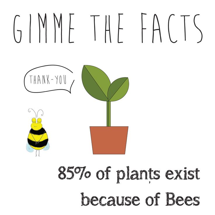GIMME THE FACTS - Bee Facts.  Bees are so important! That's why Buzz Greetings gives $1 to SAVE THE BEES Australia for every purchase made on their Etsy store.  buzzgreetings.etsy.com OR follow bee @buzzgreetings on Instagram. For more about SAVE THE BEES Australia go to beethecure.com.au