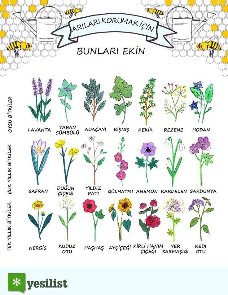 Eine Premiere in der Geschichte: offiziell ausgestorbene Bienen