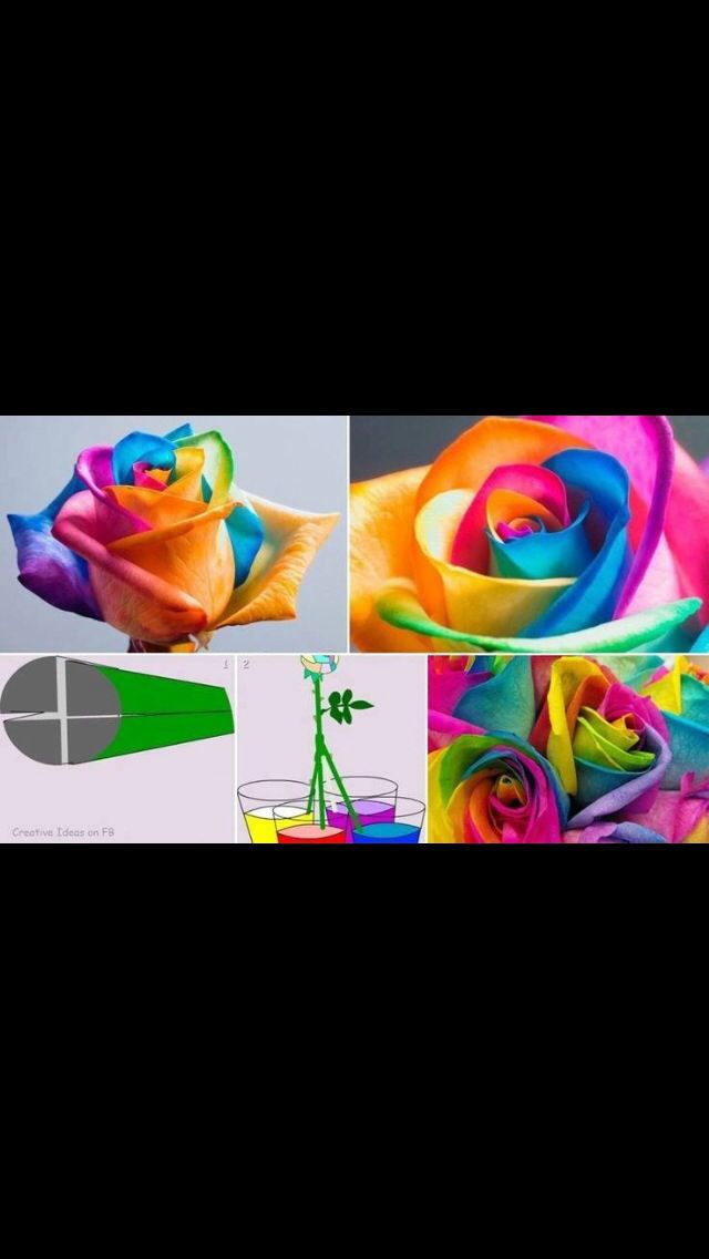 How to make a rainbow flower
