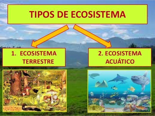 Ecosistema Terrestre Y Acuatico Para Ninos Buscar Con Google Ecosistema Terrestre Y Acuatico Ecosistemas Ecosistema Acuatico