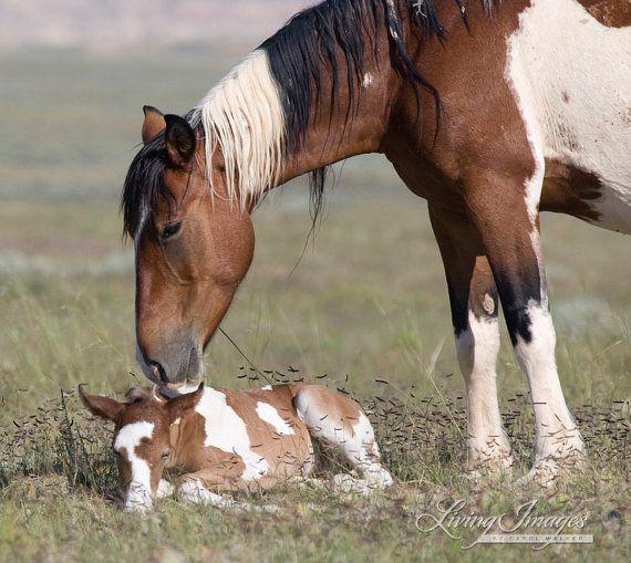 Wild Mare and Foal  Fine Art Wild Horse Photograph by Carol Walker www.LivingImagesCJW.com