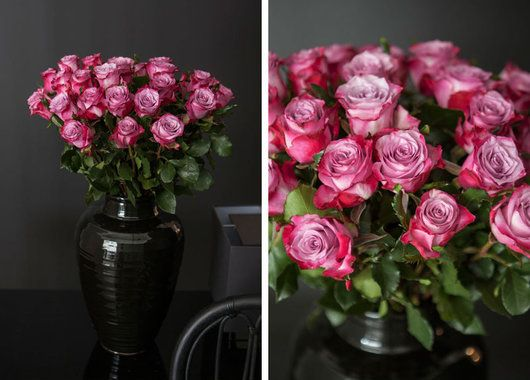 Vakre Deep Purple roser