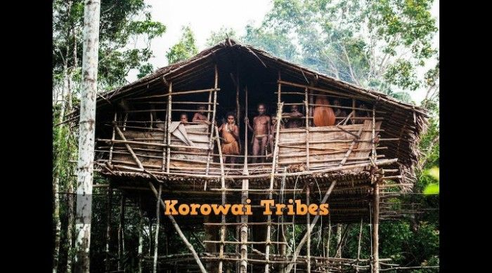 Korowai Tribes and Their Incredible Tree Houses