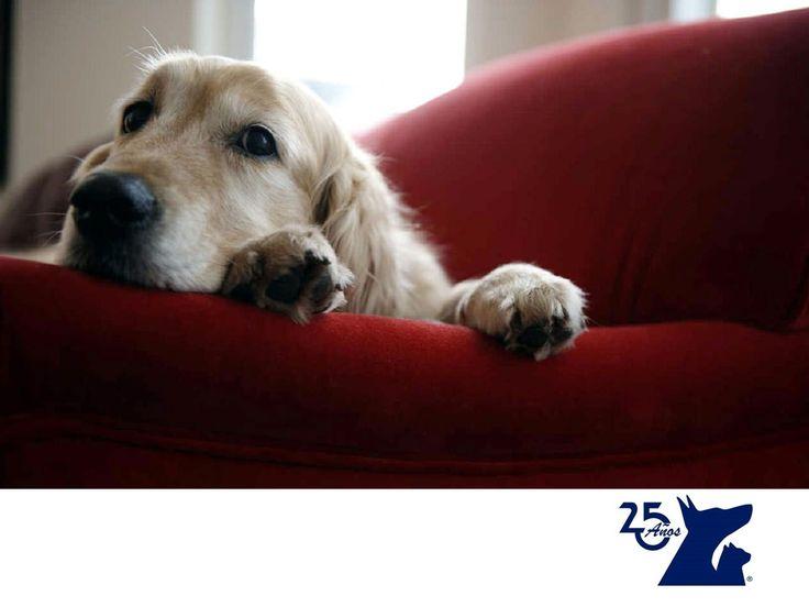 El control de esfínteres en perros. LA MEJOR CLÍNICA VETERINARIA. El control de los esfínteres en perros es un problema muy común y se presenta sobre todo, en cachorros. Los cachorros lo controlan conforme crecen, pero en los perros adultos se debe a un problema de salud. Si tu perro presenta este problema, en Clínica Veterinaria del Bosque te recomendamos traerlo con nuestros médicos especialistas para ver cuál es el origen de su problema y poder ayudarlo. www.veterinariadelbosque.com