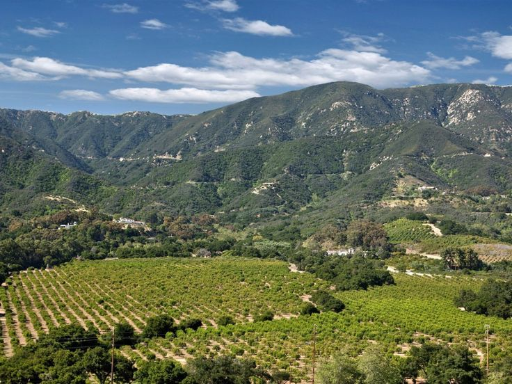 It's surrounded by mountains, views of the ocean, and 100 acres of citrus and avocado orchards.