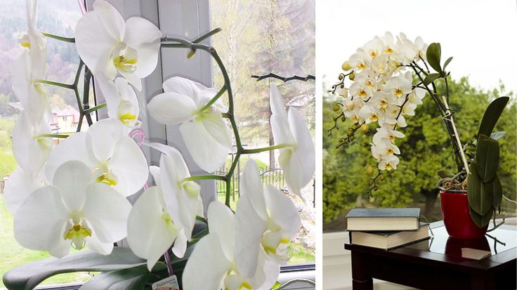 Poškodili ste nechtiac orchideu? Alebo sa jej v poslednom čase nedarí? Vymeňte jej substrát a doprajte jej ozdravný kúpeľ.