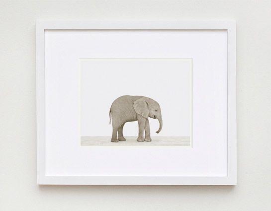 Baby Elephant: 11X17
