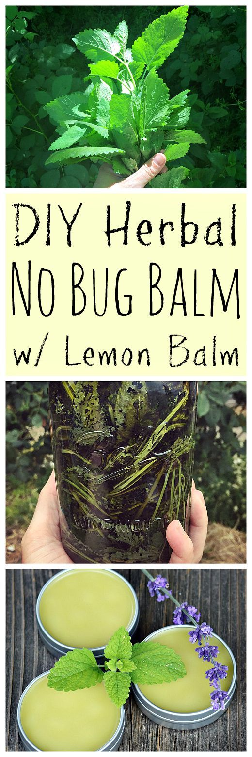Learn how to make this DIY homemade herbal no bug balm to keep unwanted bugs away! Made with pest repelling lemon balm.
