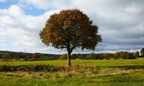 Image result for trees'