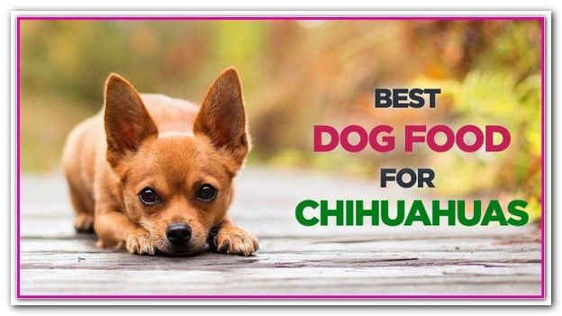 Best Cheap Dog Food For Chihuahuas Are You Wondering What The Best Foods For Your Loved Chihuahua Are Check Best Dog Food Cheap Dog Food Best Cheap Dog Food