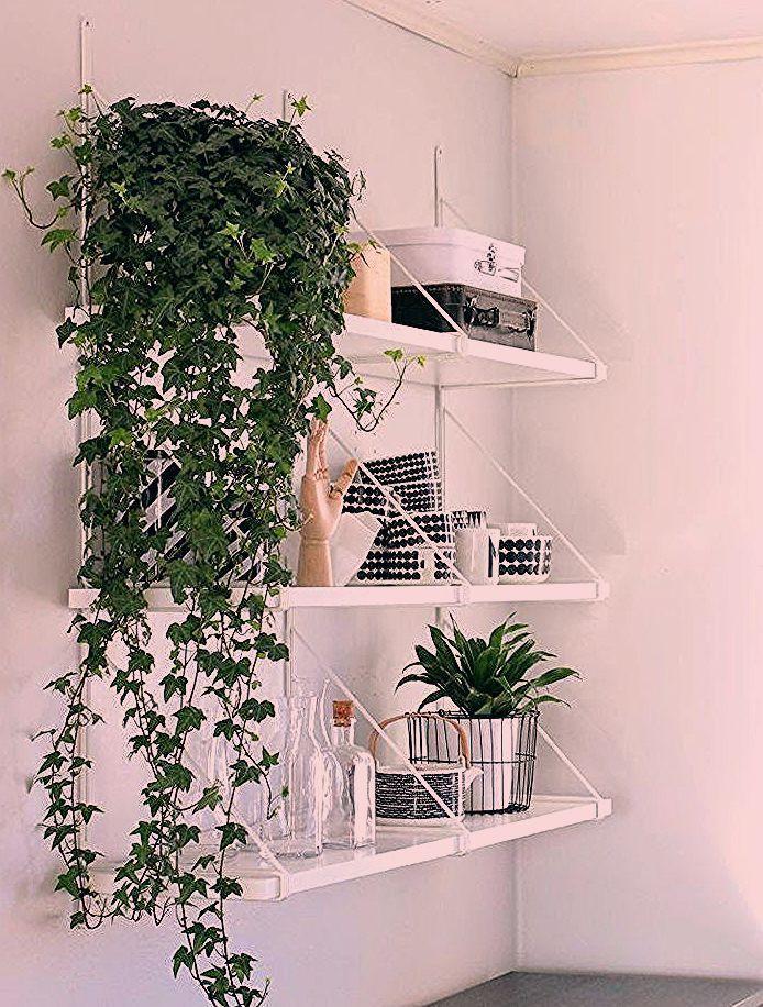 Indoor Plants White Bedroom With Plants In 2020 Bedroom Plants White Bedroom Bedroo
