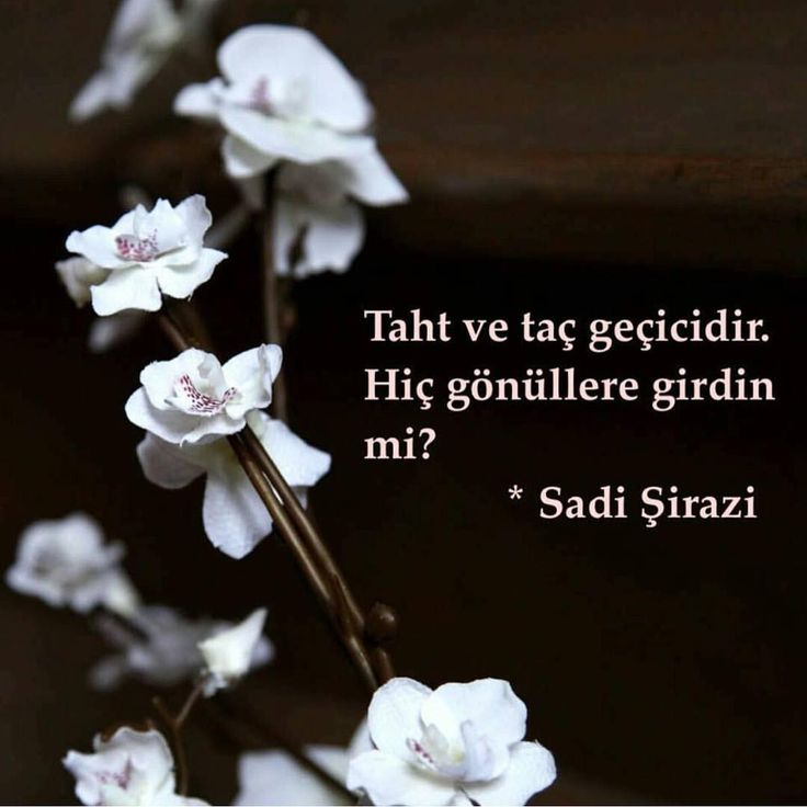 Taht ve taç geçicidir. Hiç gönüllere girdin mi? - Sadi Şirazi #sözler #anlamlısözler #güzelsözler #manalısözler #özlüsözler #alıntı #alıntılar #alıntıdır #alıntısözler #şiir #edebiyat