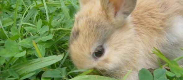 Prendersi cura di un coniglio non è così semplice come si potrebbe pensare sebbene possa essere una valida alternativa ad un animale da compagnia come un cane o un gatto nel caso in cui non si possieda abbastanza spazio o tempo.    http://www.petsparadise.it/conigli/come-prendersi-cura-di-un-coniglio/