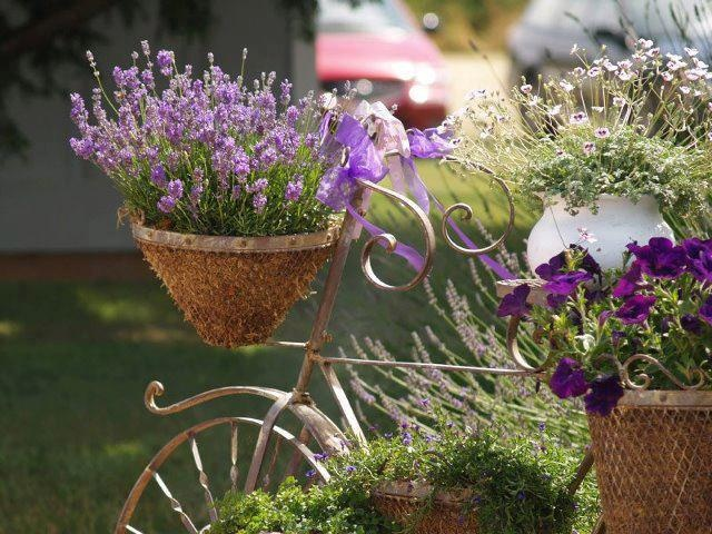 Bicicleta com vasos: Growing Plants, Bike, Beaches House, Country House, Herbs Gardens, Gardens Features, Hanging Baskets, Purple Flower, Growing Lavender
