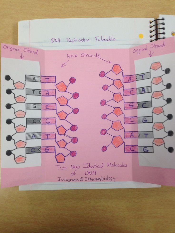 DNA Replication Foldable Inside