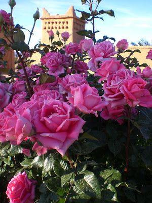 Roses à Boulmane du Dadès - Maroc - Le Jbel Saghro