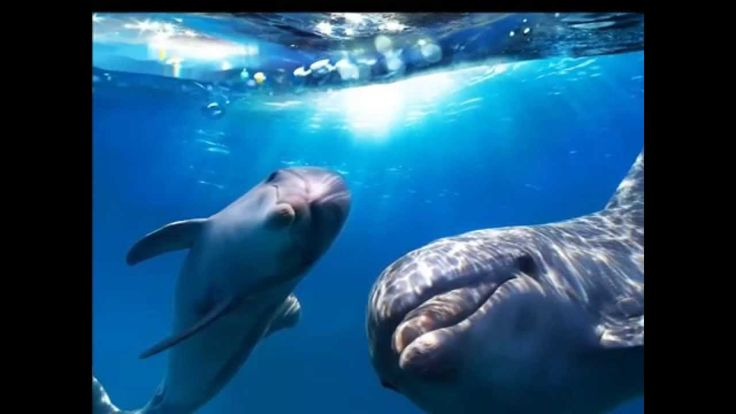 Звуки моря - Голоса дельфинов - Целительная музыка Часть 2