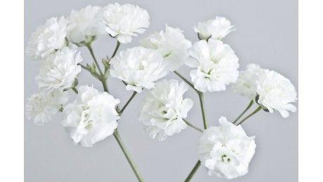 ... propos de Fleurs blanches sur Pinterest  Mariage, Seule rose et Déco