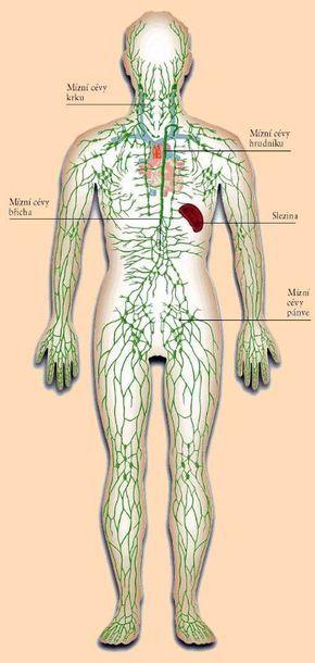 """Nefunkční lymfatický systém, to je vstupenka kzávažným chorobám.   http://youtu.""""více po přechodu na web ..."""""""