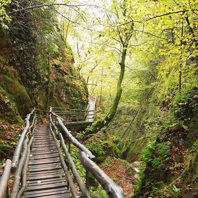 Durch die Rastenbachklamm in Südtirol #wandern #Südtirol #unterwegs #wald #volgoitaly #travelblog #outside #forest #trekking #trees #alpen #volgobolzano #visitsouthtyrol #märchenwald #wunderschön #intothewoods #nicetime #outdoors