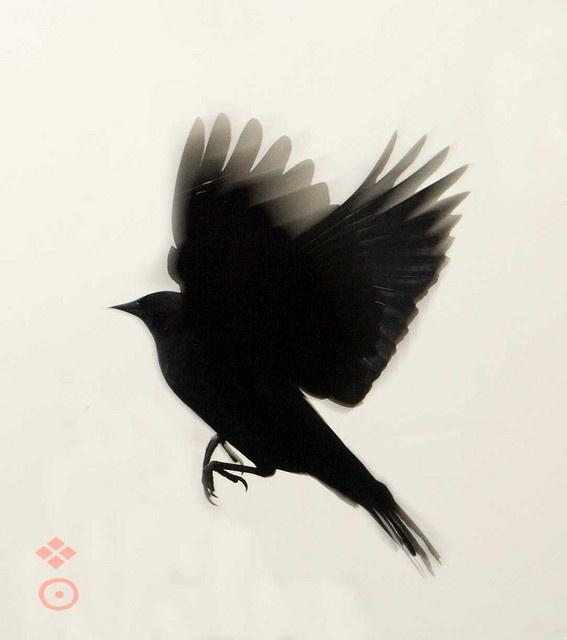 The Hundred Black Birds