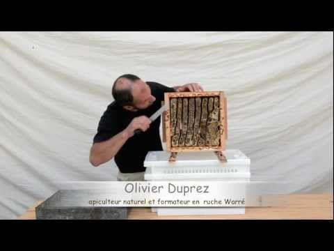 la récolte du miel - l'apiculture Warré sans aucun matériel particulier... - YouTube