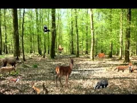 """Les animaux de """"La Forêt"""" - Chanson éducative pour enfants - Learn french - YouTube"""