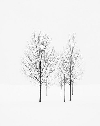 Such a simple photo, yet exudes a great sense of chilling dreariness. The contrast is so simple, between the dark trees and the empty snow, but it speaks volumes to the environment they stand in. GREAT PHOTO.