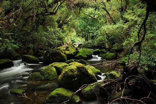 Deep in the Ureweras, New Zealand. #ngahere #bush #natives #trees #plants #water #falls #wai #Tuhoe #iwi #Maori