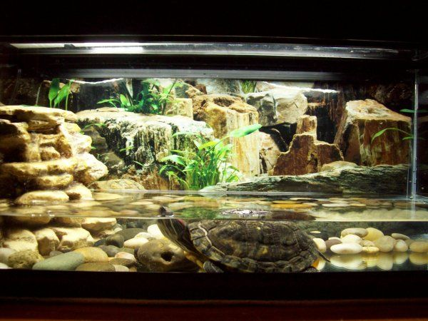 Here S A Turtle Aquarium With A Cool Background