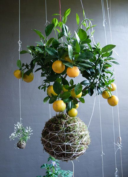 DIY hanging string gardens...interesting idea for smaller spaces