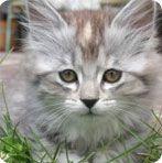 Unique Cat Names | Male