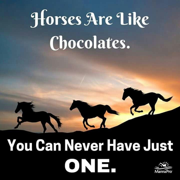 Funny Pony Quotes: 245 Best Funny Horse Quotes Images On Pinterest