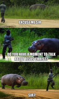 Hippos, they are hilarious