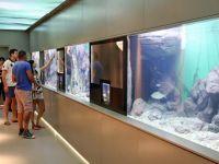Die Wasserwelt des Balaton im Besucherzentrum Bodorka in Balatonfüred.