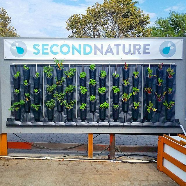 Check out our low-cost food-producing #greenwall at the LA County Fair! Two free tickets to the first four people to DM me! #aquaponics #verticalfarming #urbanfarm #hydro #savewater #herbs #vegetables #strawberries #farm #Verticalgarden #garden #fairplex #Growyourown by secondnatureaquaponics