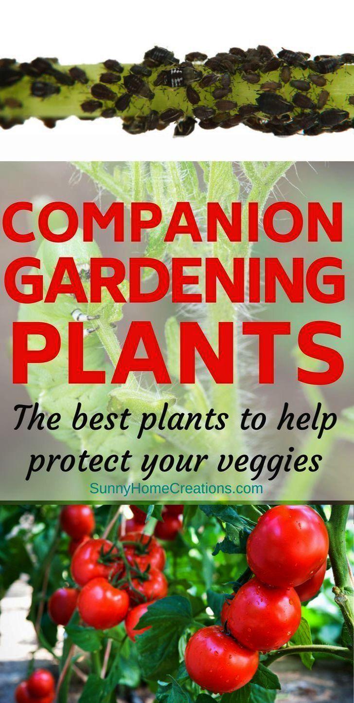 Gardening Mama About Hardy Zones Definition Until Gardening News