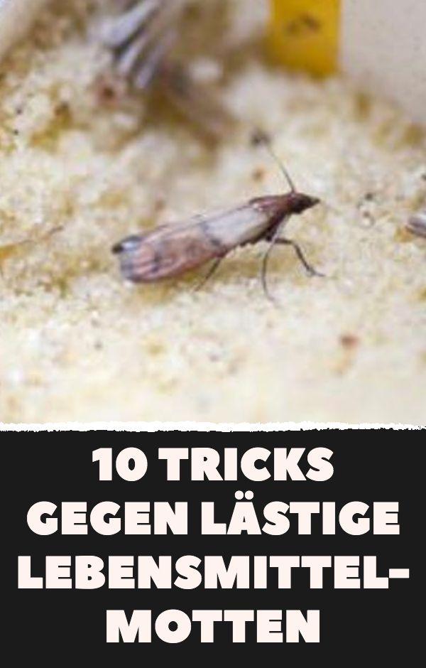 10 Tricks gegen lästige Lebensmittelmotten. #Lebe…