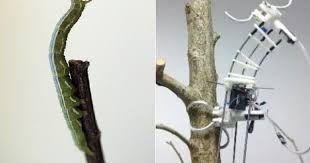 Resultado de imagen para biomimicry examples