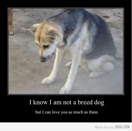 """I know I am not a breed dog, but I can love you as much as them."" Very true! <3"
