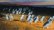 Phillip Island: Penguins, Koalas and Kangaroos Day Tour from Melbourne, Melbourne