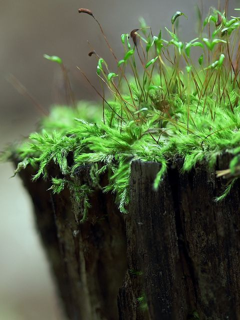 Mosses are little plants, but very important to environment.: